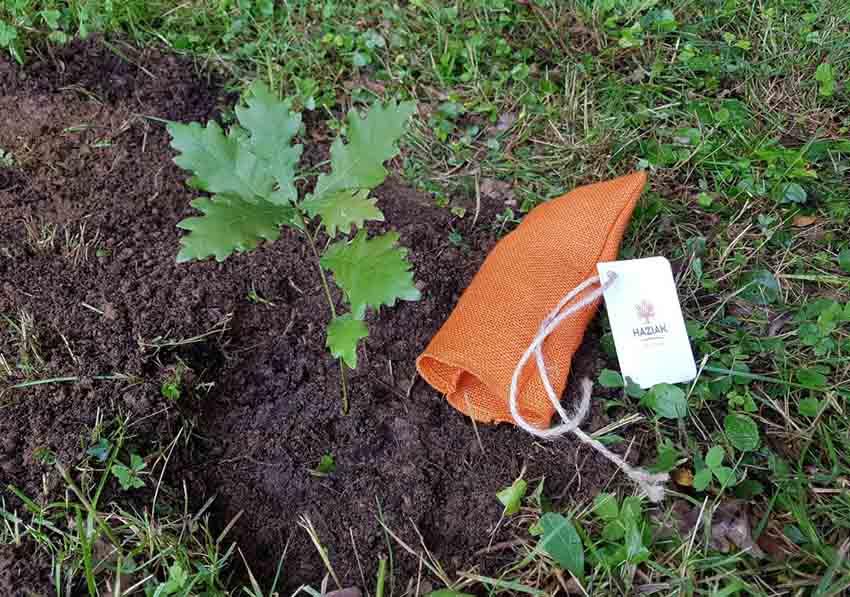 Este domingo se plantará el retoño del Árbol de Gernika en el parque y jardines Jonsered de Gotemburgo